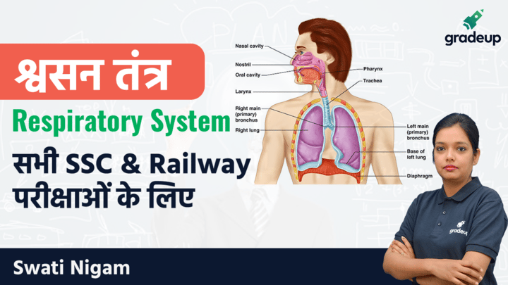Complete Human Body System: Respiratory System