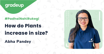 How do Plants increase in size?